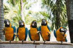 Macaw. Stock Photo