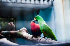 Macaw-Vögel Lizenzfreies Stockfoto