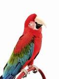 Macaw verde 120 dell'ala Fotografia Stock Libera da Diritti