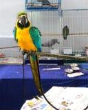 Macaw verde amarillo imagen de archivo
