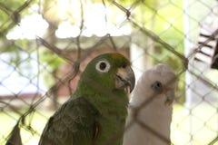 Macaw verde hermoso en jaula foto de archivo