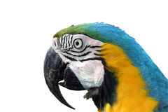 Macawpapagei lizenzfreie stockfotos
