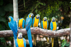 The macaws. Stock Photos