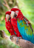 macaws Lizenzfreie Stockfotografie