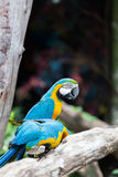 macaws Stock Foto's