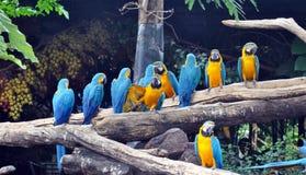 macaws Photos libres de droits