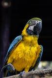 macaws stockbilder