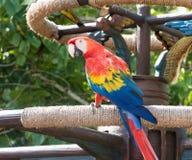 macaws Fotos de Stock