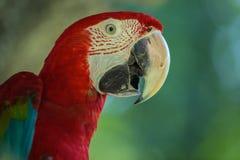 macaws Royalty-vrije Stock Foto's