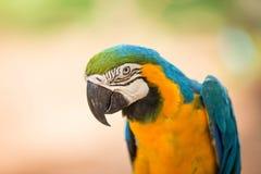 macaws Royalty-vrije Stock Afbeeldingen