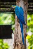 macaws Royalty-vrije Stock Foto