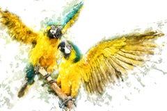 Macaws Azul-e-amarelos Imagens de Stock Royalty Free