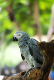 the macaws Stock Image
