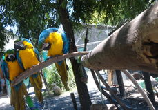 Macaws in closeup Stock Image