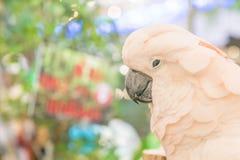 Macaws coloridos Imagem de Stock Royalty Free