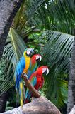 Macaws on the log Stock Images