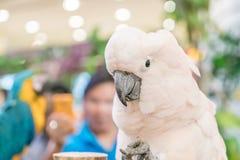 Macaws variopinti Fotografia Stock Libera da Diritti