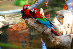 Macaws Stock Images