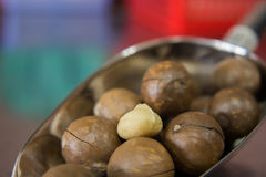 Maccadamia nuts Royalty Free Stock Image