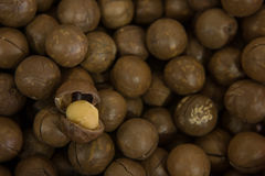 Maccadamia nuts Stock Images