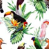 Maccaw e tucano del pappagallo sul ramo Fotografie Stock Libere da Diritti