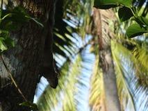 Macchi lo scoiattolo Fotografia Stock