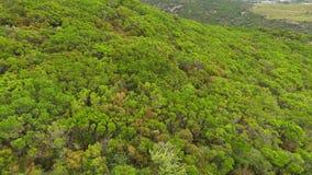Macchia landscape stock footage