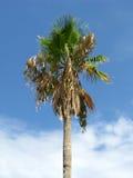 Macchia secca - fondo del cielo blu Fotografia Stock