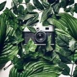 Macchina da presa d'annata in foglie verdi, vista superiore Concetto creativo di retro tecnologia immagini stock