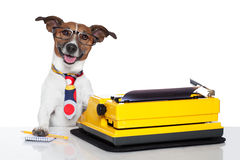Macchina da scrivere del cane di affari Fotografie Stock