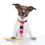 Macchina da scrivere del cane di affari Immagini Stock