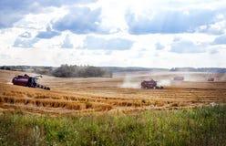 Macchina della mietitrice per raccogliere il giacimento di grano Immagine Stock Libera da Diritti