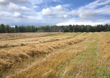 Macchina di agricoltura su un campo nel giorno di estate Fotografie Stock