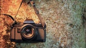 Macchina fotografica analogica sul tronco di albero Fotografie Stock Libere da Diritti