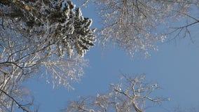Macchina fotografica che gira nell'ambito delle cime dell'albero coperte di neve stock footage