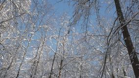 Macchina fotografica che gira nell'ambito delle cime dell'albero coperte di neve nella foresta di inverno stock footage