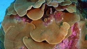 Macchina fotografica che segue intorno ad un grande corallo del poro video d archivio