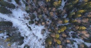 Macchina fotografica che sembra basso diritto sopra la foresta dell'abete di inverno nel tramonto Fotografia Stock