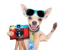 Macchina fotografica del cane del fotografo fotografia stock libera da diritti