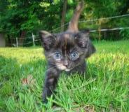 Macchina fotografica della calza del gattino Immagine Stock Libera da Diritti