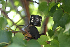 Macchina fotografica di web sul ramo dell'albero Fotografie Stock Libere da Diritti