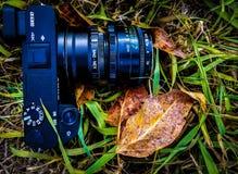 Macchina fotografica in erba con le foglie fotografie stock