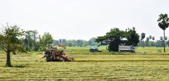 Macchina nel giacimento del riso per il raccolto del riso Immagini Stock Libere da Diritti
