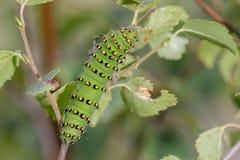 Macchina verde di Foglia-cibo Fotografia Stock Libera da Diritti