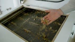 Macchinario elettrico del mulino per la produzione della farina di frumento Attrezzatura del grano stock footage