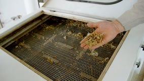 Macchinario elettrico del mulino per la produzione della farina di frumento Attrezzatura del grano grano agricoltura industriale Immagine Stock