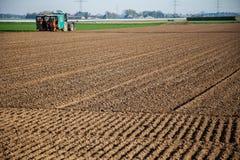 Macchine di agricoltura sul giacimento dell'asparago Fotografie Stock