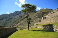Macchu Picchu, Peru, South America Royalty Free Stock Photo