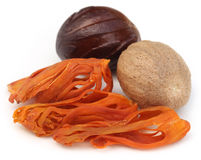 Mace or Javitri Spice with nutmeg Stock Images