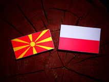 Macedonian flag with Polish flag on a tree stump isolated. Macedonian flag with Polish flag on a tree stump vector illustration